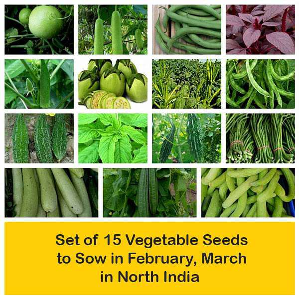 Set of 15 Vegetable Seeds to Sow in February, March in North India - Nurserylive