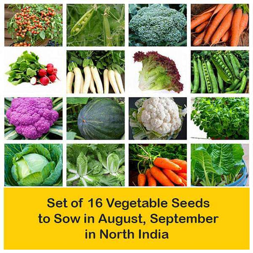 Set of 16 Vegetable Seeds to Sow in August, September in North India - Nurserylive
