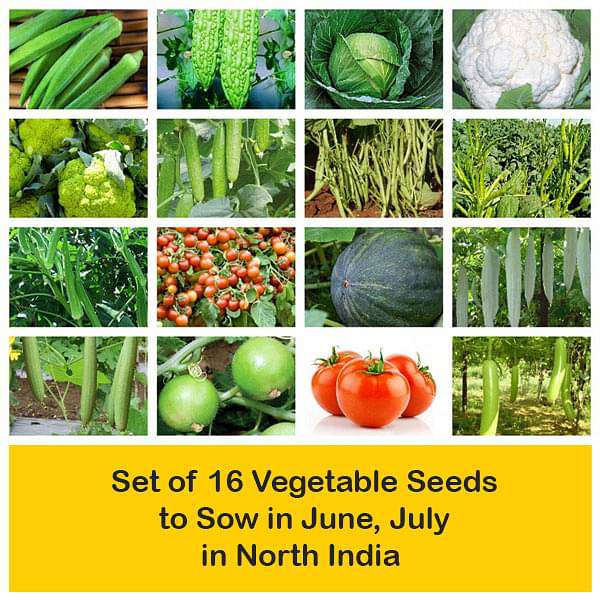 Set of 16 Vegetable Seeds to Sow in June, July in North India - Nurserylive