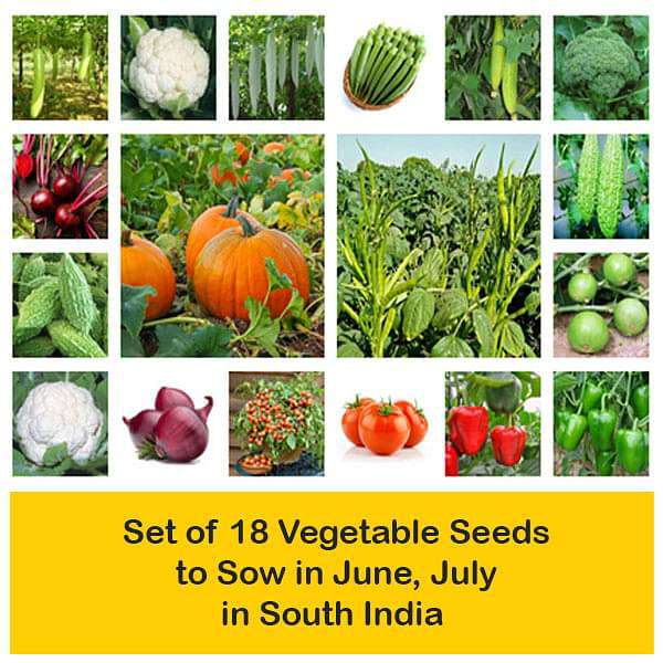 Set of 18 Vegetable Seeds to Sow in June, July in South India - Nurserylive