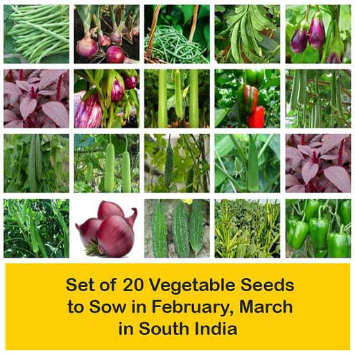 Set of 20 Vegetable Seeds to Sow in February, March in South India - Nurserylive