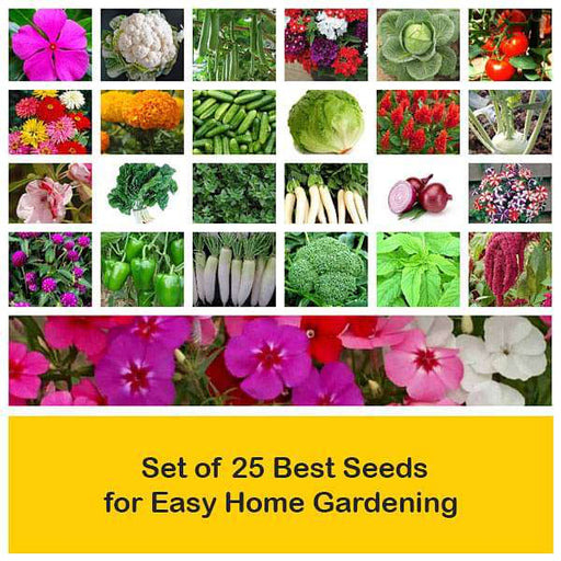 Set of 25 Best Seeds for Easy Home Gardening - Nurserylive