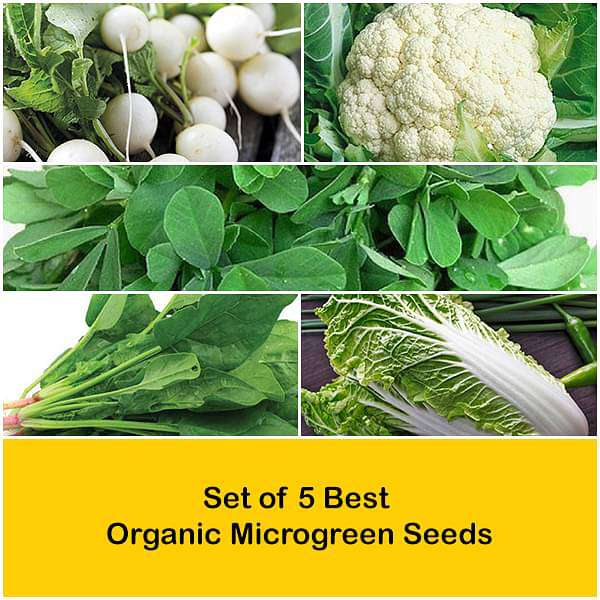 Set of 5 Best Organic Microgreen Seeds - Nurserylive