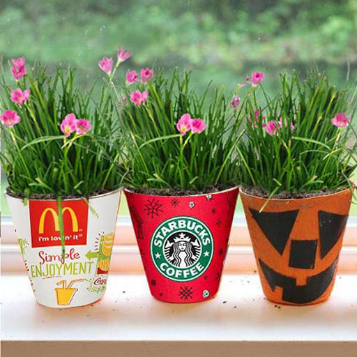 Cheerful Flowering Bulbs - Nurserylive