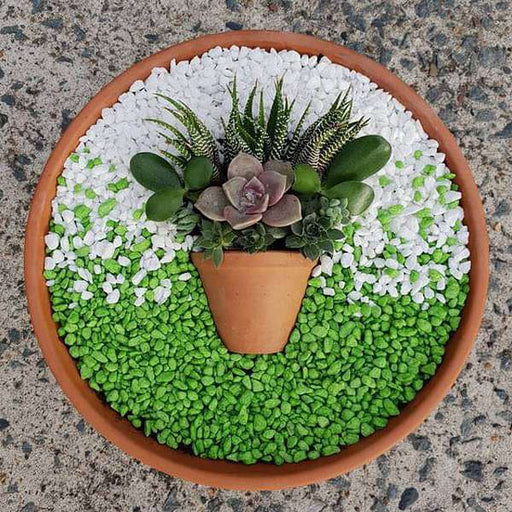 Beautify Succulent Art with Pebbles - Nurserylive
