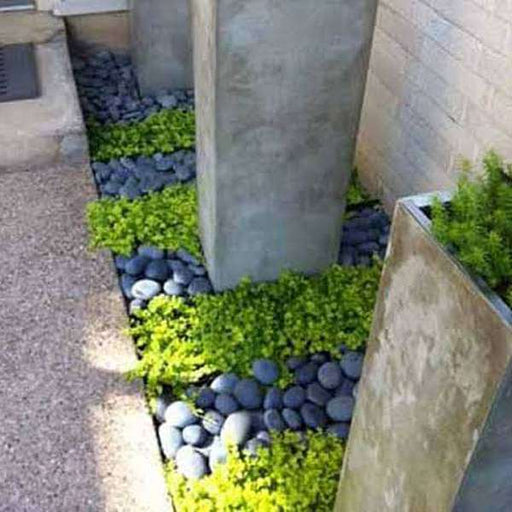 Dress up Landscape Edge with Beautiful Pebbles - Nurserylive