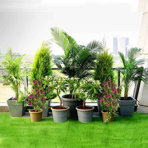 A Lush Green Garden on Terrace - Nurserylive