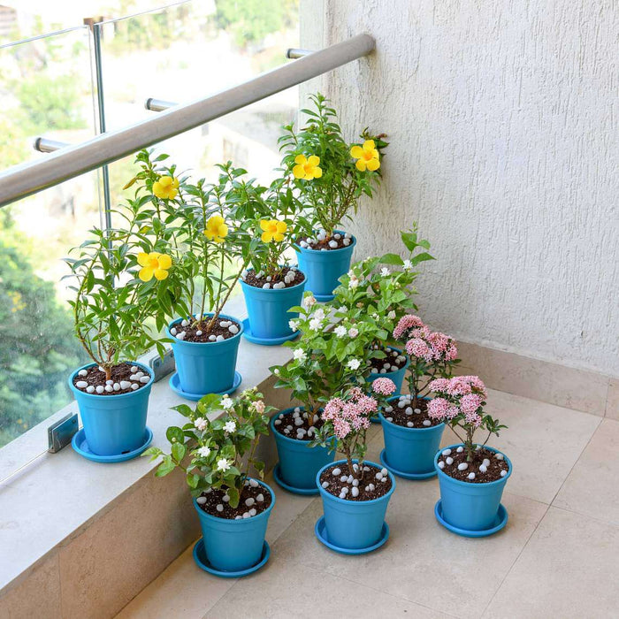 Beautiful Flower Garden in a Balcony - Nurserylive