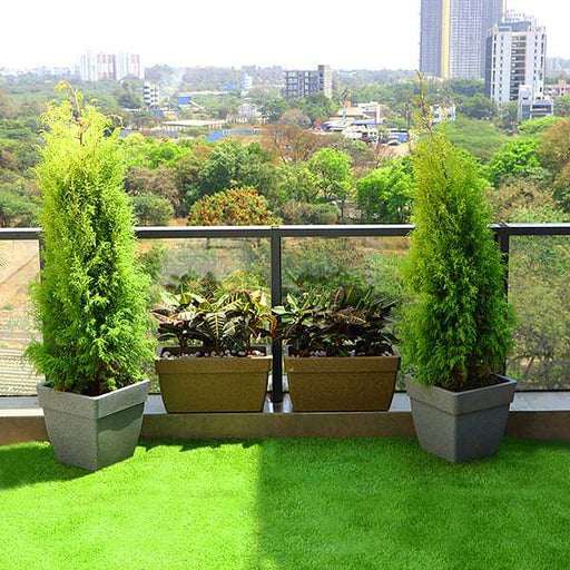 Beautify Garden at Terrace with Popular Foliage Plants - Nurserylive