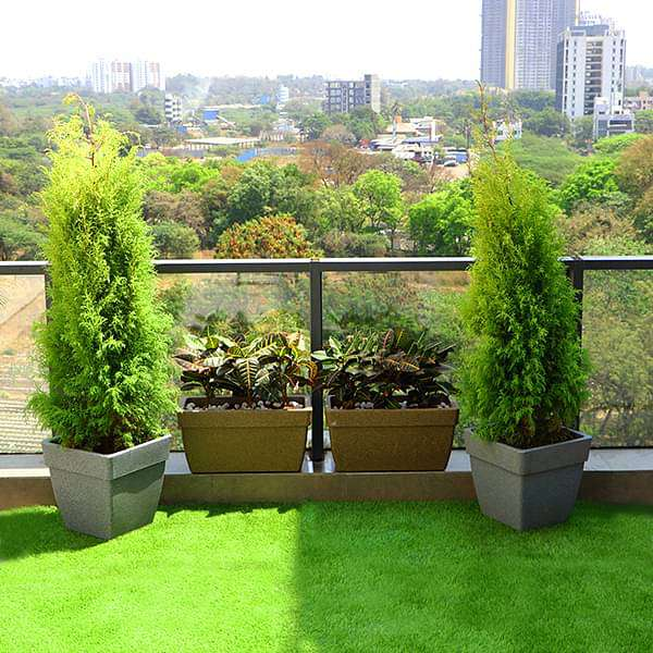 Beautify Garden at Terrace with Popular Foliage Plants
