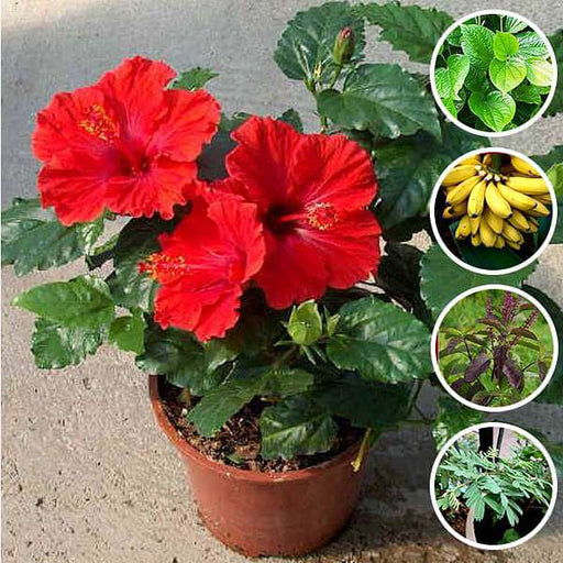 Best 5 Auspicious Plants for Ganesh Pooja - Nurserylive