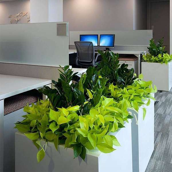 Best indoor survivals for office decor - Nurserylive