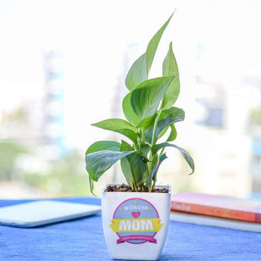 Bring Fortune for Mom With Money Plant - Nurserylive