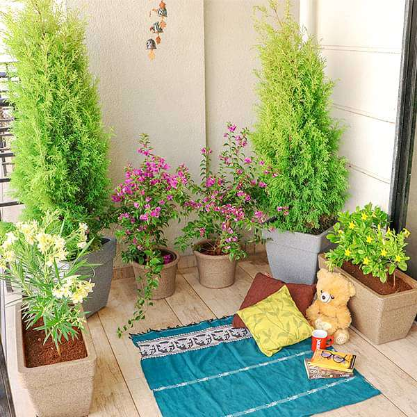 Charming Flowering and Foliage Plants for a Garden in Balcony - Nurserylive