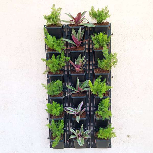 Colorful Foliage Living Wall for Outdoor Space - Nurserylive