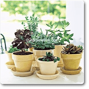 Comfortable 3BHK (Classic) Plant Decor Pack - Nurserylive