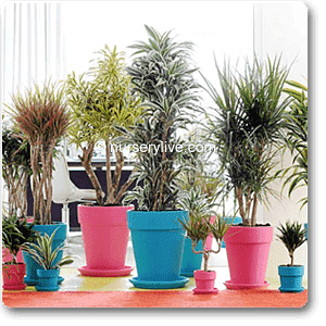 Cozy 2BHK (Classic) Plant Decor Pack - Nurserylive