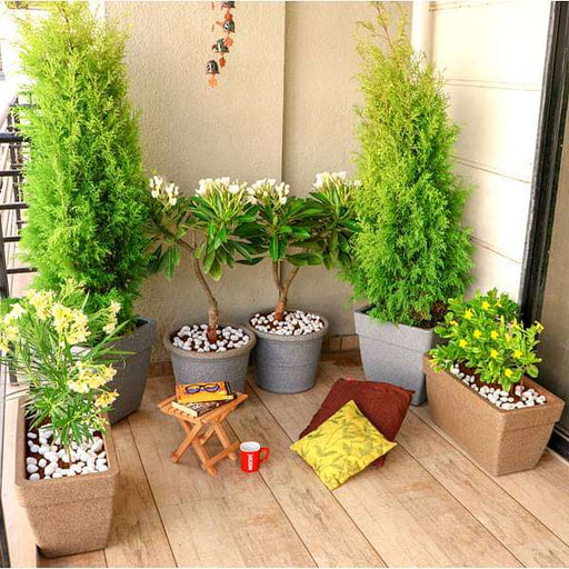 Create a Green Corner with Gardening in Balcony - Nurserylive
