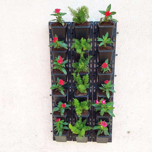 Delightful Flowering and Foliage Plants Pack for Outdoor Vertical Gardening - Nurserylive