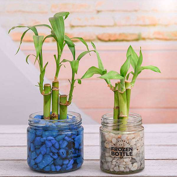 Grow Your Own Luck - Nurserylive