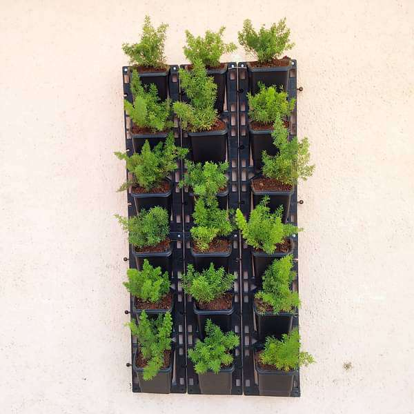 Lush Green Plants Pack for Outdoor Vertical Gardening - Nurserylive