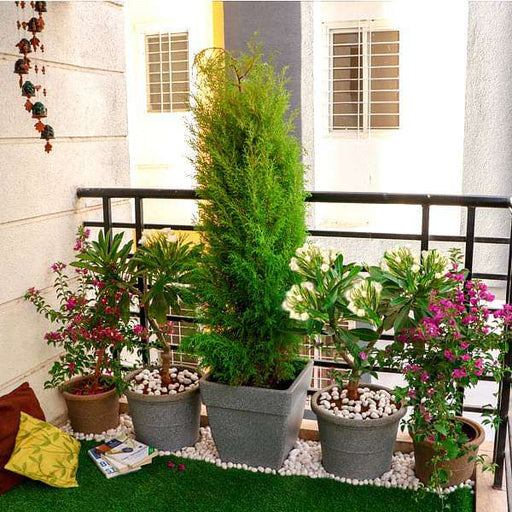Small Apartment Sunny Balcony Garden - Nurserylive