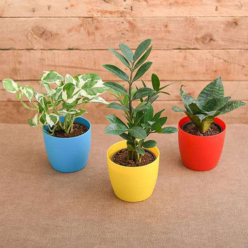 Top 3 Marvelous Air Purifier Plants for Bedroom - Nurserylive