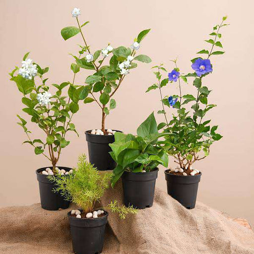 Top 5 Monsoon Special Plants - Nurserylive
