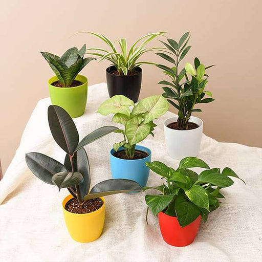 Top 6 plants for healthy lifestyle - Nurserylive