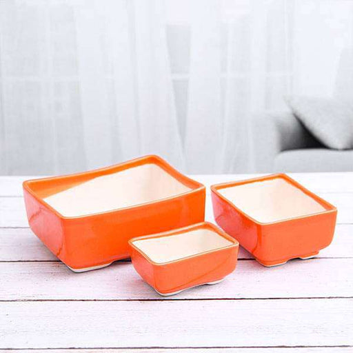 Bonsai Rectangle Ceramic Pots - Pack of Three - Nurserylive