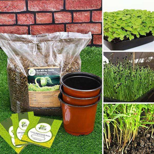 Best 3 Microgreen Seeds -  Kitchen Garden Pack - Nurserylive