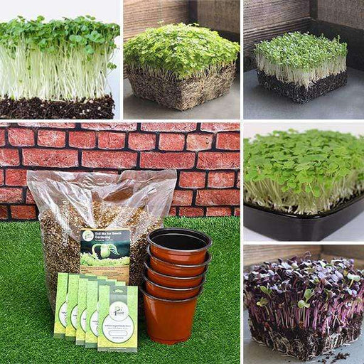 Best 5 exotic Microgreen seeds - Kitchen Garden Pack - Nurserylive