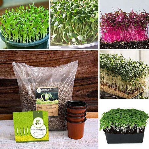 Best 5 indigenous Microgreen seeds -  Kitchen Garden Pack - Nurserylive