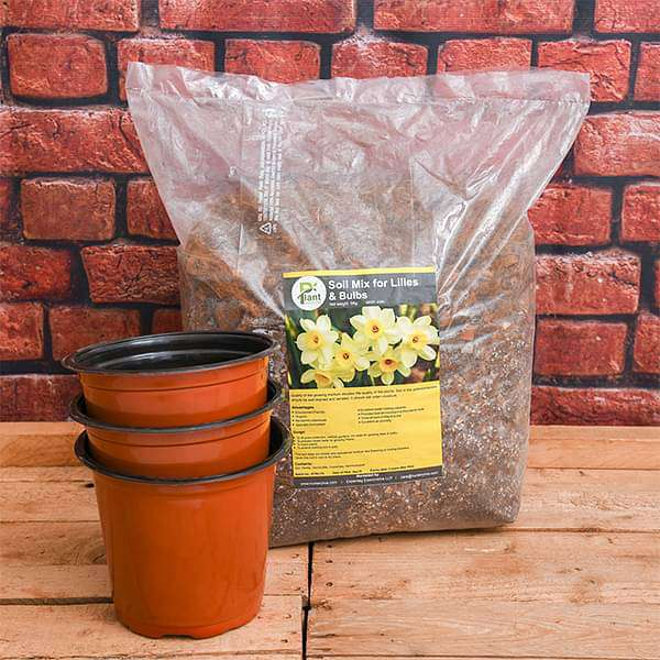 Best Flowering Bulbs - Garden Pack - Nurserylive