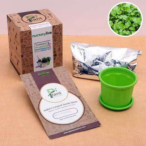 Easy to Grow Coriander Seeds - Garden Pack - Nurserylive