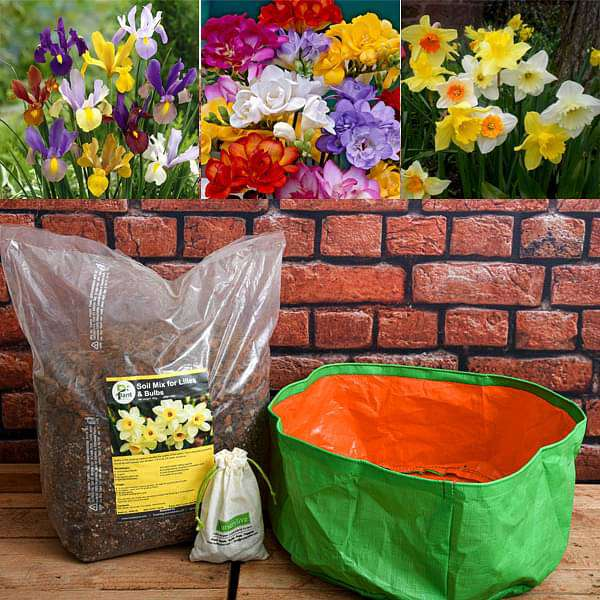 Easy to Grow Winter Bulbs - Garden Pack - Nurserylive