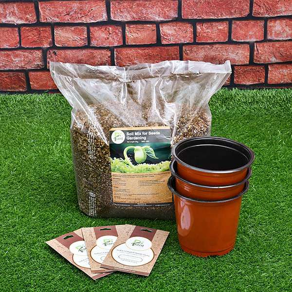 Grow flowers through seeds - Kids learning garden pack - Nurserylive