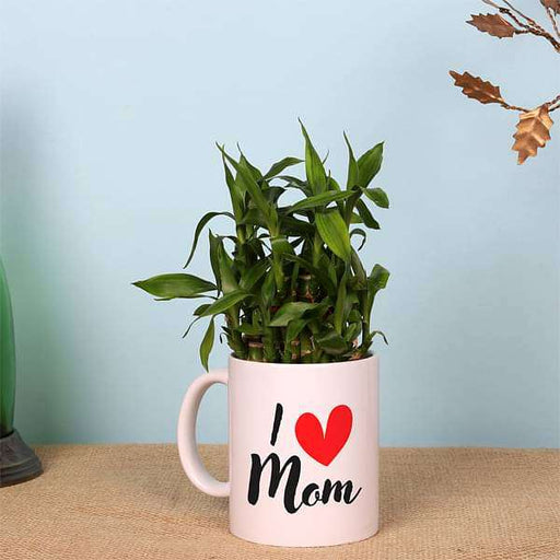 2 Layer Lucky Bamboo in I Love Mom Mug - Nurserylive