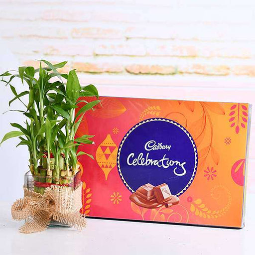 2 Layer Lucky Bamboo with Chocolate for Sweetness in Relations - Nurserylive
