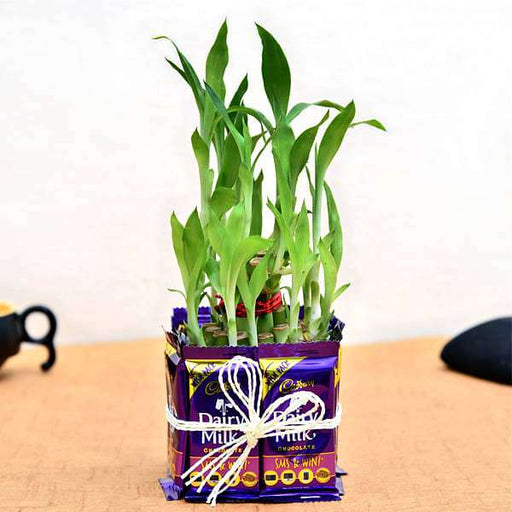 2 Layer Lucky Bamboo with Chocolates for Sweet Father - Nurserylive