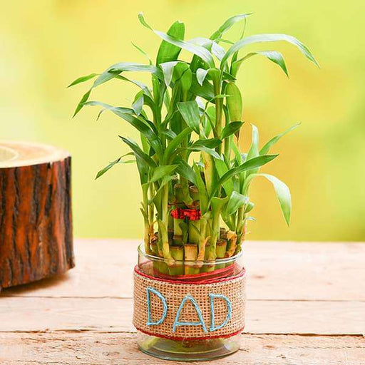 2 Layer Lucky Bamboo with Jute Wrap for Caring DAD - Nurserylive