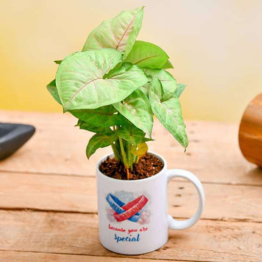 Air Purifying Syngonium in a Best Friend Mug - Nurserylive