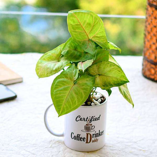 Air Purifying Syngonium in a Coffee Mug for Hardworking Dad - Nurserylive