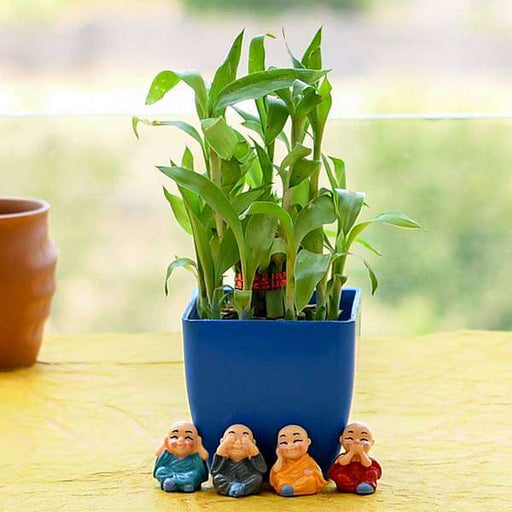 Alluring 2 Layer Lucky Bamboo for AC Office Desk - Nurserylive