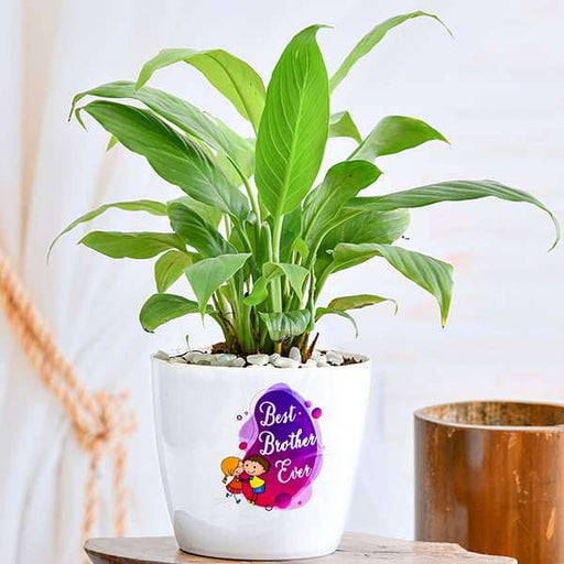 Attractive Peace lily for Best Brother Ever - Nurserylive