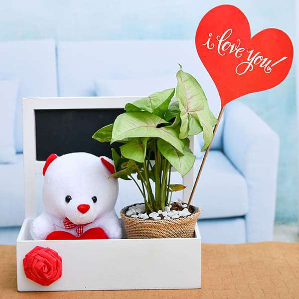 Basket of Love with Syngonium and Cute Teddy