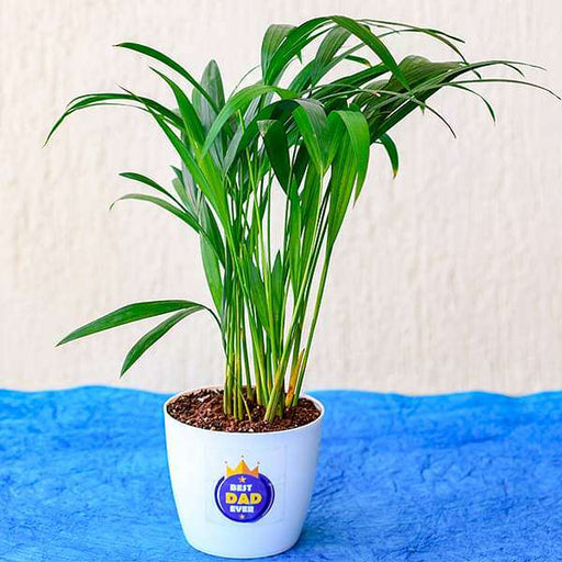 Best Indoor Areca Palm for Best Dad Ever - Nurserylive