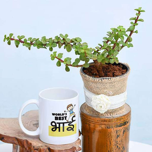 Best Jade Plant with Mug for Worlds Best Brother - Nurserylive