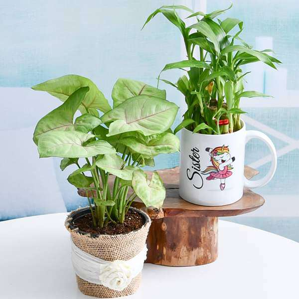 Best Plants for Best Sister Ever - Nurserylive