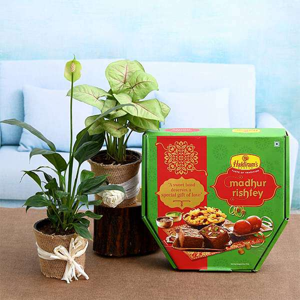 Box of Sweets with Air Purifier Plants - Nurserylive
